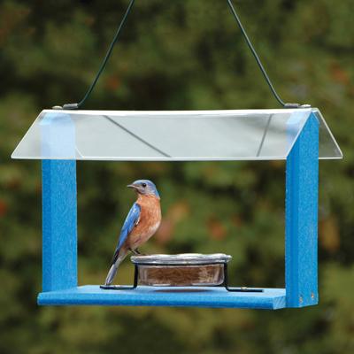 Recycled Plastic Bluebird Feeder The Bird House Ny