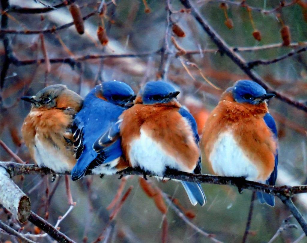 Blue Bird New Bird